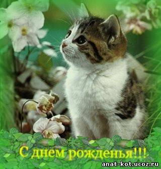 http://anat-kot.ucoz.ru/_nw/1/51053.jpg